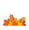 bouquet fallen autumn leaves vector image vector image