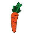 delicious vegetable carrot vector image vector image