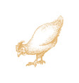 hand drawn hen in engraving style graphic vector image