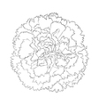 Black and white carnation flower isolated on white