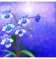 Bush Orchid violet on a luminous vector image vector image
