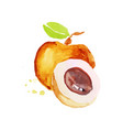 peach juicy ripe fruit watercolor hand painting vector image