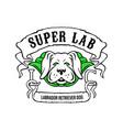 super labrador retriever dog wearing green cape vector image vector image
