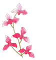 Branch with orchid flowers vector image