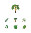 flat icon nature set of alder hickory wood and vector image vector image