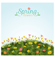 Flowers Spring Field Season Background vector image vector image