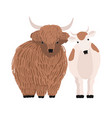pair yak and cow isolated on white background vector image