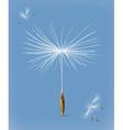 Dandelion seeds icon vector image