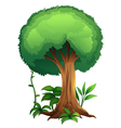 A tree vector | Price: 1 Credit (USD $1)