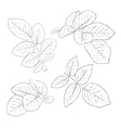 black and white rose leaves isolated on white vector image vector image