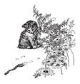 cat watching worm vintage vector image vector image