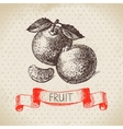Hand drawn sketch fruit mandarin Eco food vector image vector image
