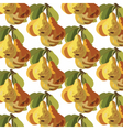 Watercolor Pears Fruits pattern vector image