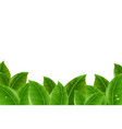 green leaves border vector image vector image
