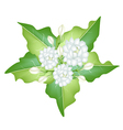 Jasmine Flowers on White Background