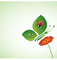 summer beetle vector image vector image