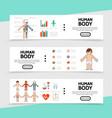 flat anatomy horizontal banners vector image vector image