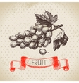 Hand drawn sketch fruit grape Eco food background vector image vector image