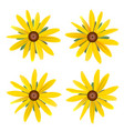set of isolated buds yellow daisy with leaves vector image