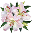 White Lily vector image vector image