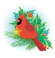 Christmas cardinal vector image