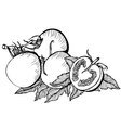 Monochrome drawing of tomatoes vector image