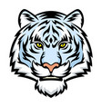 white tiger head logo vector image