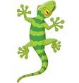 Cartoon gecko vector image