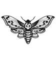 deaths head hawk moth vector image vector image