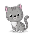 gray kitten sitting on a white background cute vector image vector image