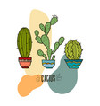 houseplant prickly green cactuses vector image