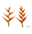 isolated tropical flowers heliconia vector image vector image