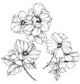 rosa canina flower black and white vector image vector image