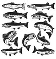 big set of fish pike salmon trout perch design vector image vector image