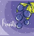delicious fruits cartooon vector image vector image