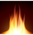 Fire flame burn on black background vector image