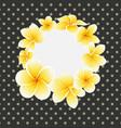 golden frangipani or plumeria flower on vector image vector image