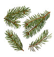 set green branches a christmas tree vector image