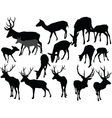 deer collection vector image vector image