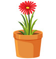 pot red flower on white background vector image vector image