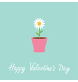 Daisy in pot Happy Valentines Day card vector image vector image