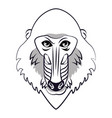 mandrill face cool sketch vector image