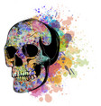 watercolor human skull with vector image