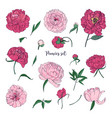 beautiful peonies set hand drawn blossom flowers vector image vector image