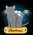 cat chartreux under the light of the moon vector image vector image