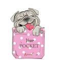 little pug in pocket vector image