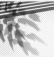 photorealistic foliage shadow effect vector image vector image
