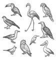 set isolated bird wildlife sketches animal vector image vector image