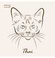 Thai cat vector image vector image