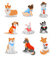 cute purebred puppies set pedigree dog characters vector image